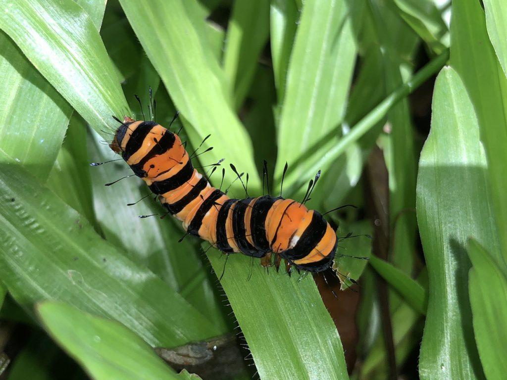 BioQuesting Caterpillar